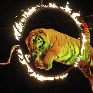 Цирки Уссурийска
