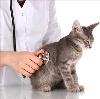 Ветеринарные клиники в Уссурийске